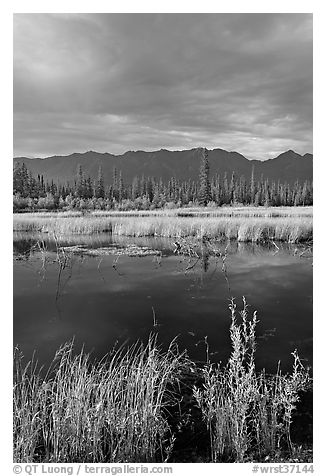 Pond, tundra and mountains. Wrangell-St Elias National Park (black and white)