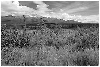 Lowland tundra, and Mentasta Mountains. Wrangell-St Elias National Park, Alaska, USA. (black and white)