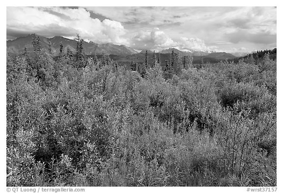 Tundra in summer and Nutzotin Mountains. Wrangell-St Elias National Park (black and white)