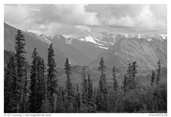 Spruce and Nutzotin Mountains. Wrangell-St Elias National Park, Alaska, USA.