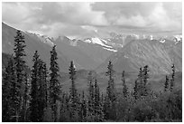Spruce and Nutzotin Mountains. Wrangell-St Elias National Park, Alaska, USA. (black and white)