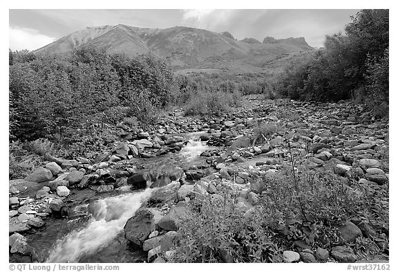 Fireweed, stream and Skokum Volcano. Wrangell-St Elias National Park (black and white)