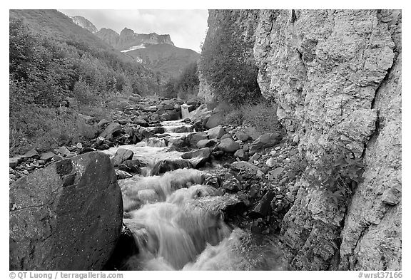 Fireweed, stream and cliff, Skokum Volcano. Wrangell-St Elias National Park (black and white)