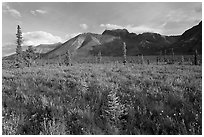 Meadow and Skokum Volcano. Wrangell-St Elias National Park, Alaska, USA. (black and white)
