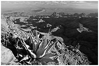 Agaves on South Rim, evening. Big Bend National Park, Texas, USA. (black and white)