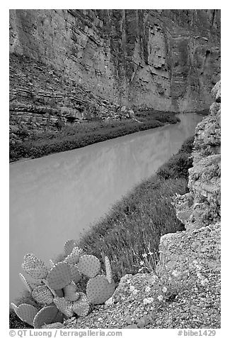 Flowers, cactus, and Rio Grande in Santa Elena Canyon. Big Bend National Park (black and white)