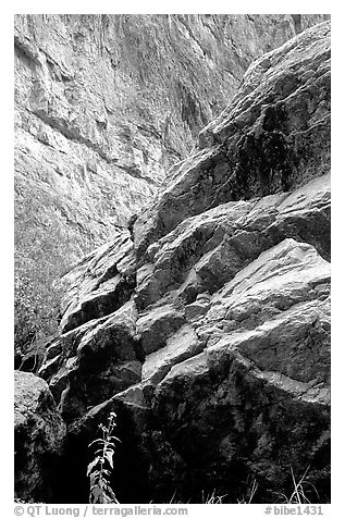 Rocks in Santa Elena Canyon. Big Bend National Park (black and white)
