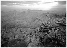 Agave plants overlooking desert mountains from South Rim. Big Bend National Park, Texas, USA. (black and white)