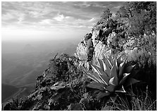 Agave and cliff, South Rim, morning. Big Bend National Park, Texas, USA. (black and white)