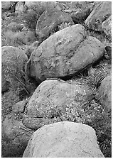Boulders and wildflowers. Big Bend National Park ( black and white)