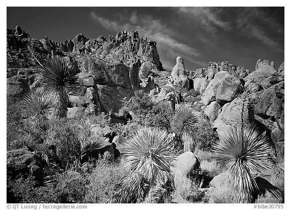 Yuccas and boulders in Grapevine mountains. Big Bend National Park (black and white)
