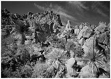 Yuccas and boulders in Grapevine mountains. Big Bend National Park, Texas, USA. (black and white)