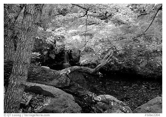 Springs in the Chisos Mountains. Big Bend National Park (black and white)
