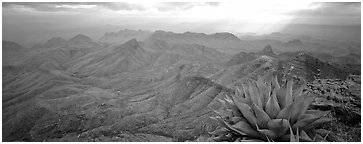 Century plant and desert mountains from South Rim. Big Bend National Park (Panoramic black and white)