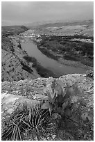 Cactus and Rio Grande Wild and Scenic River. Big Bend National Park, Texas, USA. (black and white)