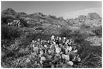 Cactus and Chisos Mountains. Big Bend National Park, Texas, USA. (black and white)