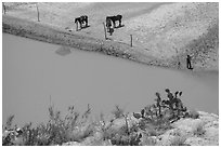 Cactus and horses from above. Big Bend National Park, Texas, USA. (black and white)