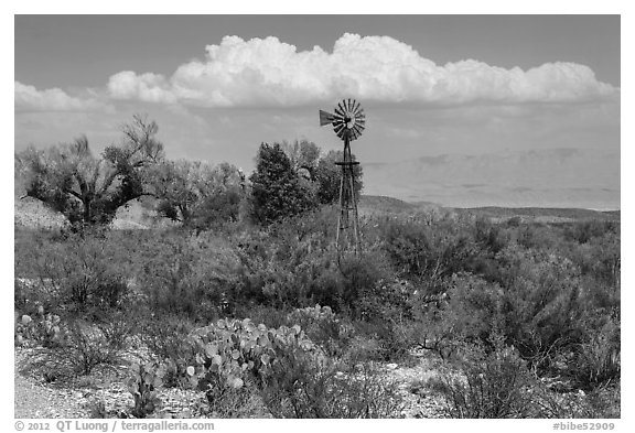 Windmill and oasis, Dugout Wells. Big Bend National Park (black and white)
