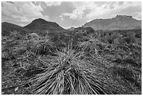 Chihuahuan desert in drought. Big Bend National Park, Texas, USA. (black and white)