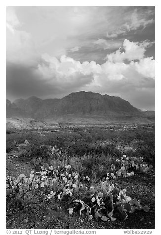 Cactus, Chisos Mountains, and clearing storm. Big Bend National Park (black and white)