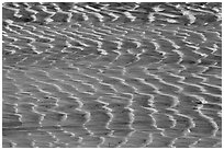Mud flat close-up. Big Bend National Park, Texas, USA. (black and white)