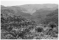 Rattlesnake Canyon. Carlsbad Caverns National Park ( black and white)