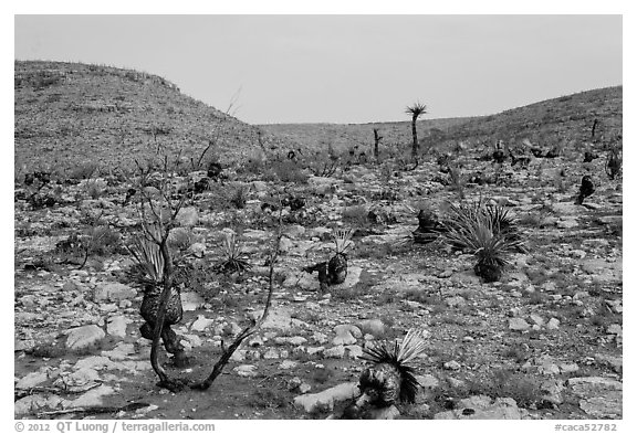 Burned desert. Carlsbad Caverns National Park (black and white)