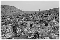 Burned desert. Carlsbad Caverns National Park, New Mexico, USA. (black and white)