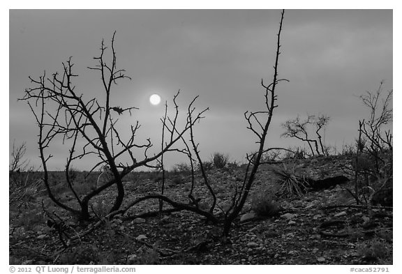 Sun through wildfire smoke and burned shrubs. Carlsbad Caverns National Park (black and white)