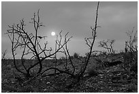 Sun through wildfire smoke and burned shrubs. Carlsbad Caverns National Park, New Mexico, USA. (black and white)