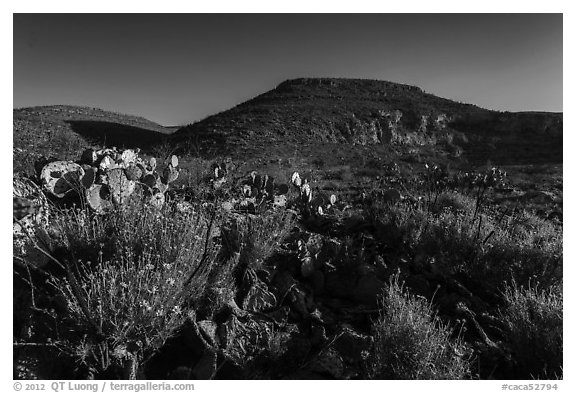 Flowers and cactus in Walnut Canyon. Carlsbad Caverns National Park (black and white)