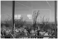 Ocotillos, yuccas and cactus, visitor center window reflexion. Carlsbad Caverns National Park, New Mexico, USA. (black and white)