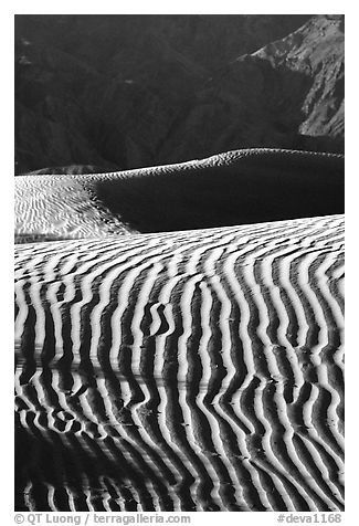 Ripples on Mesquite Sand Dunes, morning. Death Valley National Park (black and white)