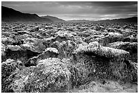 Salt formations, Devil's golf course. Death Valley National Park, California, USA. (black and white)