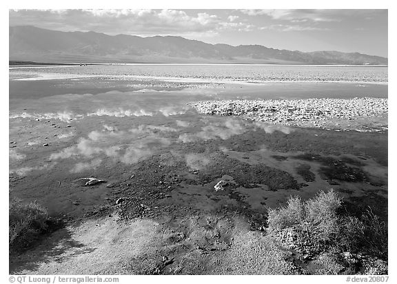 Shallow pond, reflections, and playa, Badwater. Death Valley National Park (black and white)