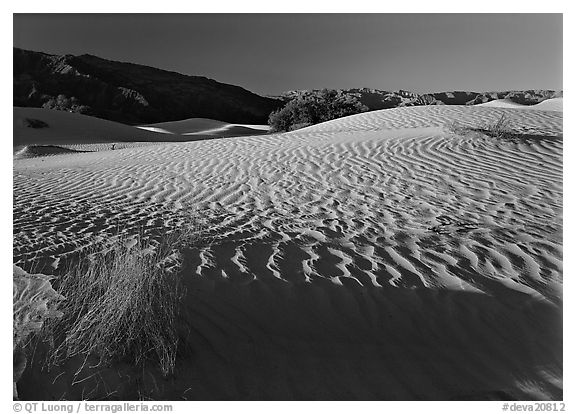Ripples on Mesquite Dunes, early morning. Death Valley National Park (black and white)