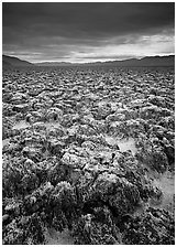 Salt pinnacles at Devils Golf Course. Death Valley National Park, California, USA. (black and white)