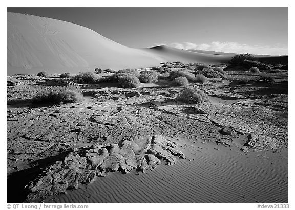 Mud formations in the Mesquite sand dunes, early morning. Death Valley National Park (black and white)