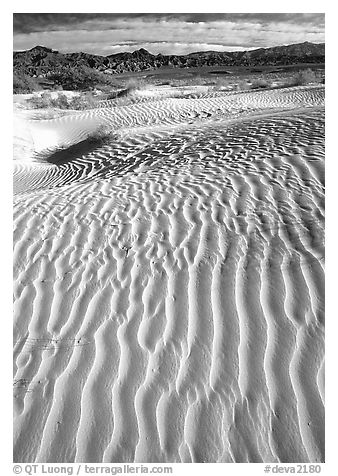 Ripples on Mesquite Sand Dunes. Death Valley National Park (black and white)