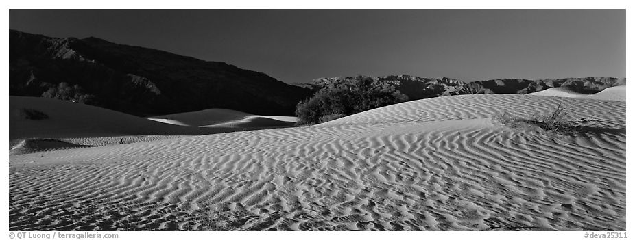 Desert landscape with sand ripples, Mesquite dunes. Death Valley National Park (black and white)