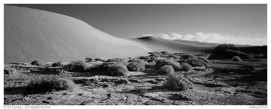 Desert landscape with mud slabs, bushes, and sand dunes. Death Valley National Park (black and white)