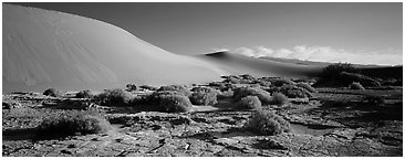 Desert landscape with mud slabs, bushes, and sand dunes. Death Valley National Park (Panoramic black and white)