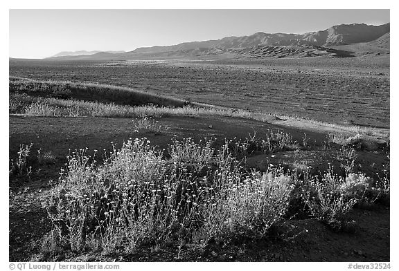 Desert Gold and Owlshead Mountains, Ashford Mill area, early morning. Death Valley National Park (black and white)