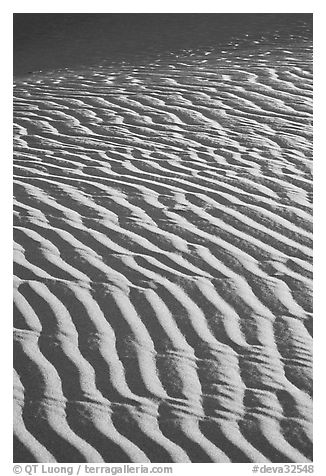 Close-up of Sand ripples, sunrise. Death Valley National Park (black and white)