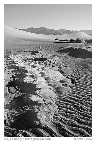 Cracked mud and sand ripples, Mesquite Sand Dunes, early morning. Death Valley National Park (black and white)