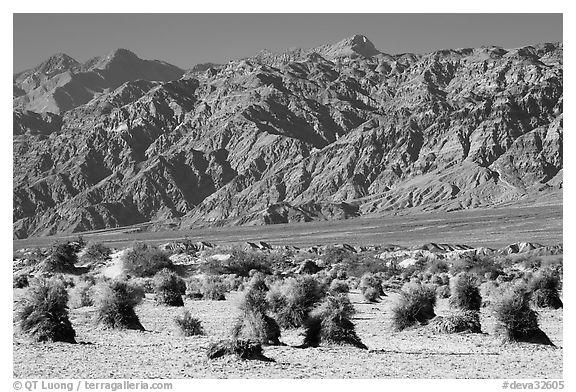 Devil's cornfield and Armagosa Mountains. Death Valley National Park (black and white)
