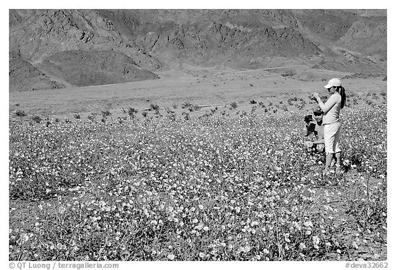 Couple videotaping and photographing in a field of Desert Gold near Ashford Mill. Death Valley National Park (black and white)