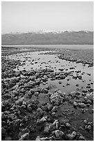 Recently emerged salt pools, Badwater, dawn. Death Valley National Park, California, USA. (black and white)