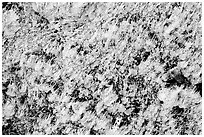 Close-up of salt formation. Death Valley National Park, California, USA. (black and white)