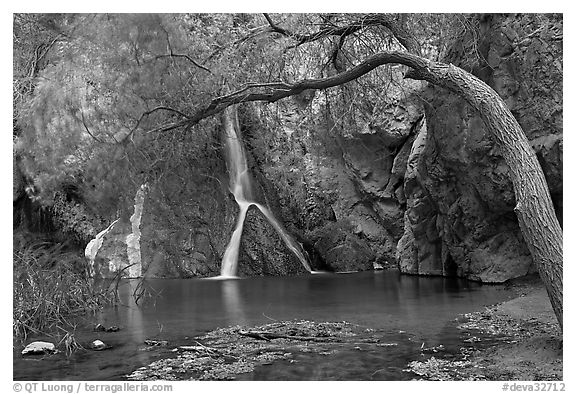 Desert Oasis with Darwin Falls. Death Valley National Park (black and white)